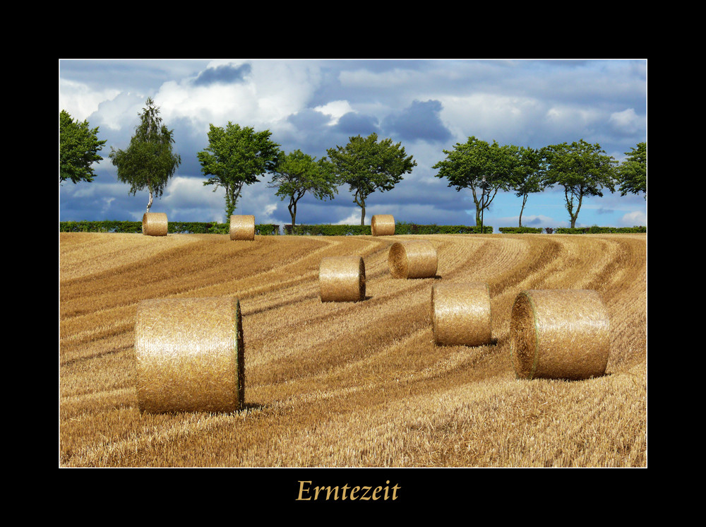 ...Zeit der Ernte....