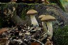 Zeit der Pilze