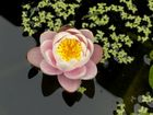 Zeit der (See)Rosen