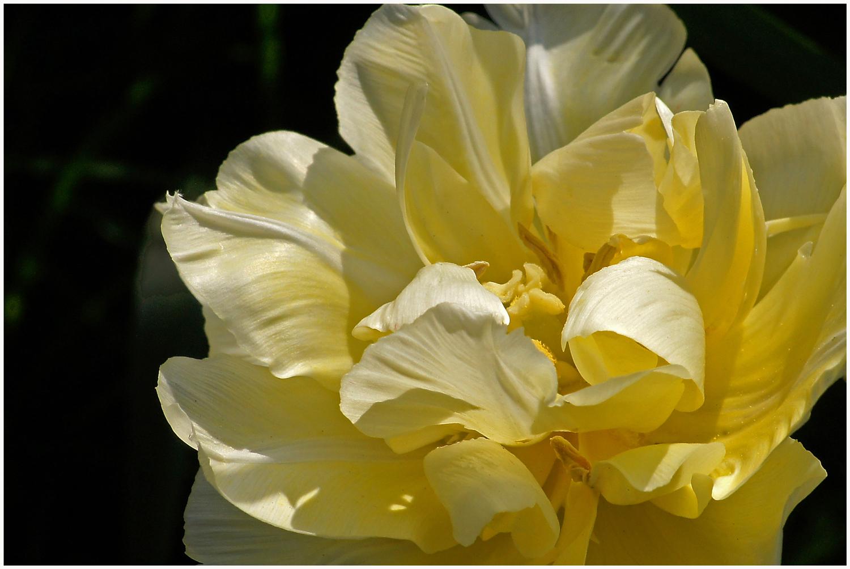 Zeit der Tulpen