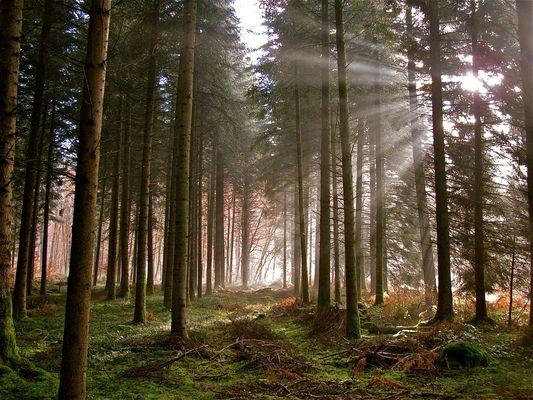 ... Zeit des Lichtes !!!...