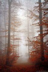 Zeit des Nebels