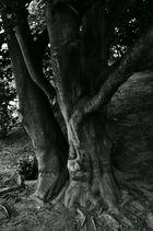 Zeit unter Bäumen