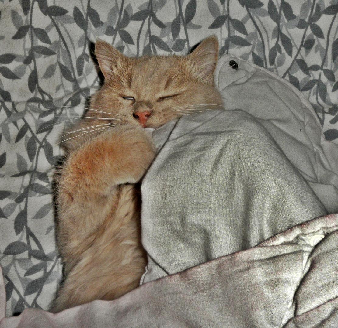 Zeit zum schlafen gehen- Träum süß