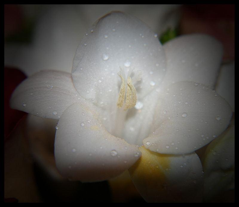 Zeitlose Schönheit II