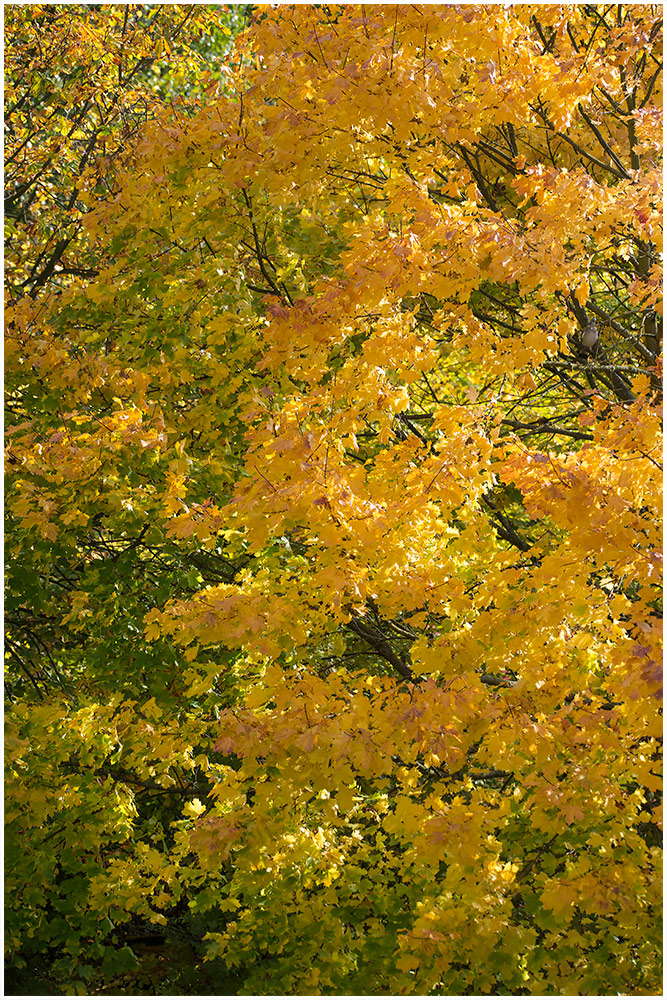 Zeitweise Goldener Oktober