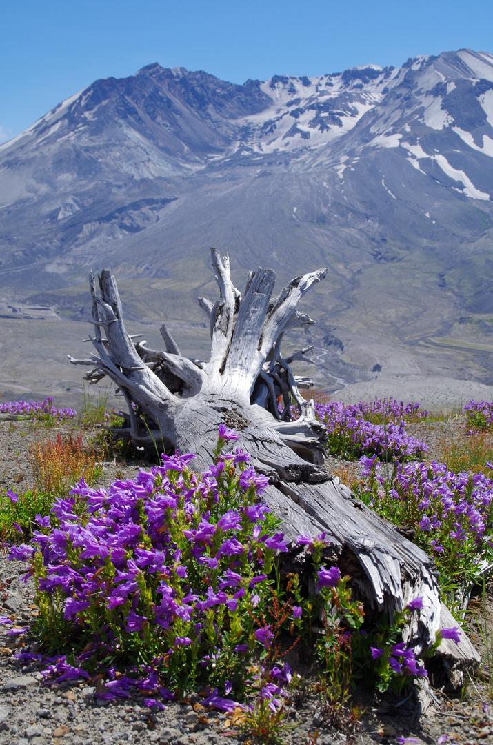 Zeitzeuge oder Mt. Saint Helens 2