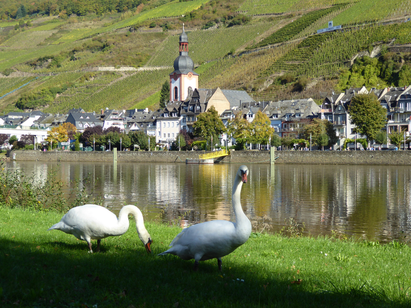 Zell, Mosel...