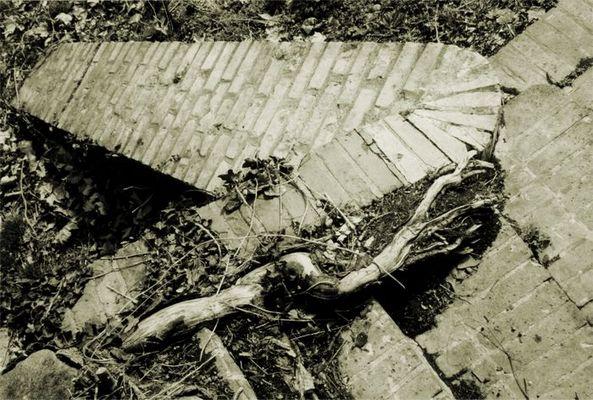 Zerfall eines Weinbergdetails