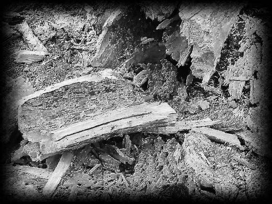Zerfallender Baum - abstrakt