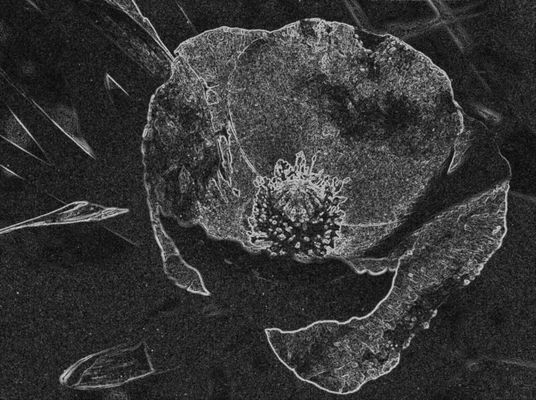 Zersplitterte Blume