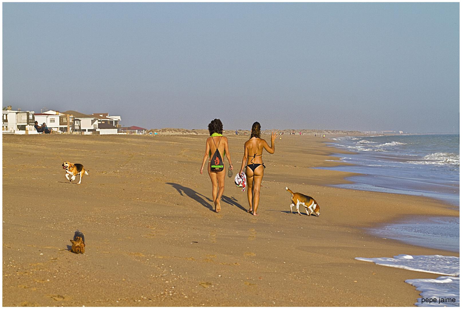 Zeta, Airam y Jota...mis perros