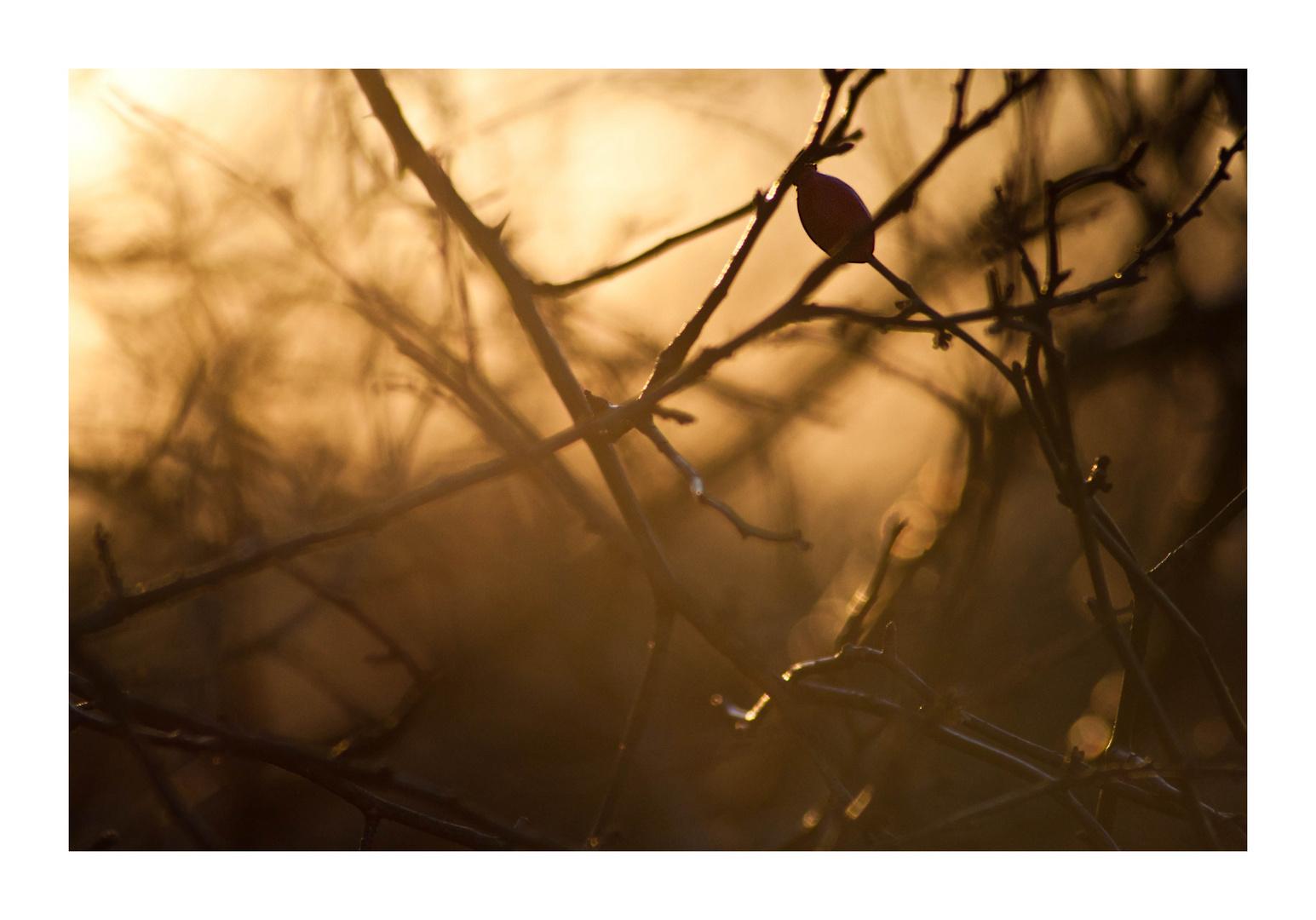 Zeugen des Herbstes