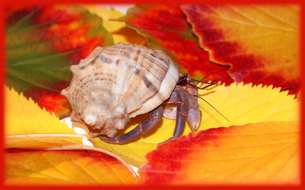 Zeus entdeckt den Herbst