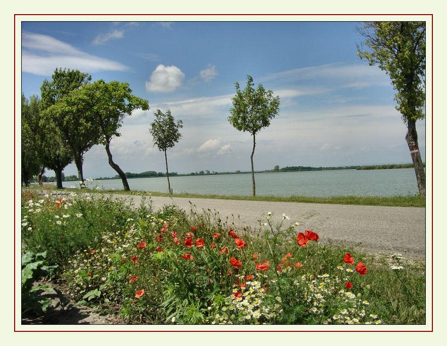Zicksee-Idylle 1 Burgenland