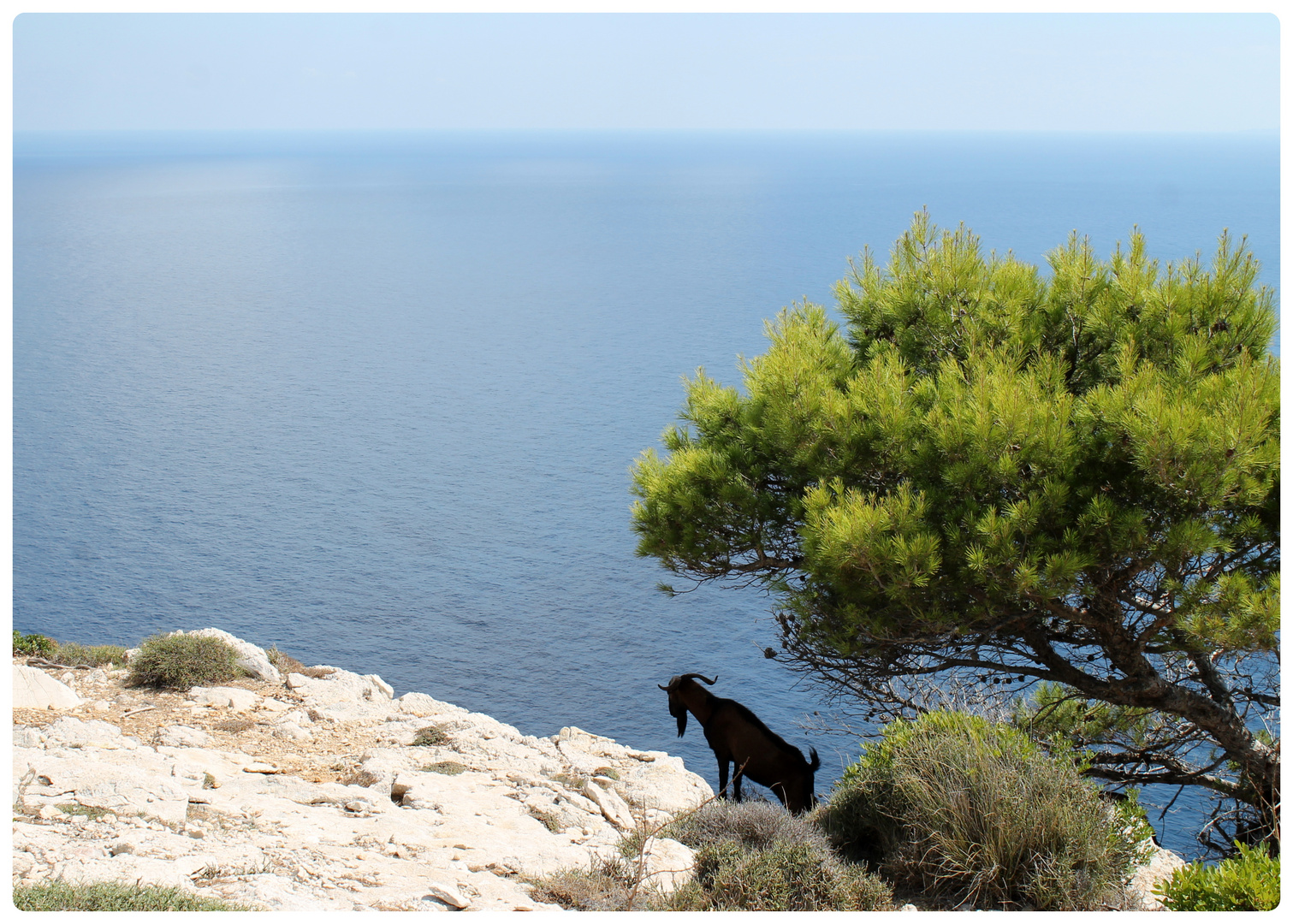 Ziegenbock am Cap de Formentor