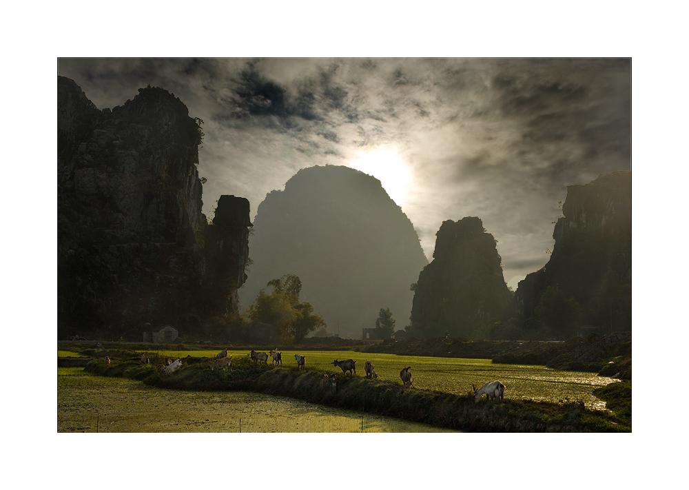 Ziegenherde bei Ninh Binh