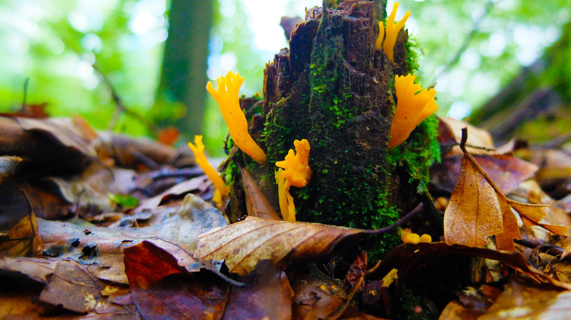 Pilz Pflanze