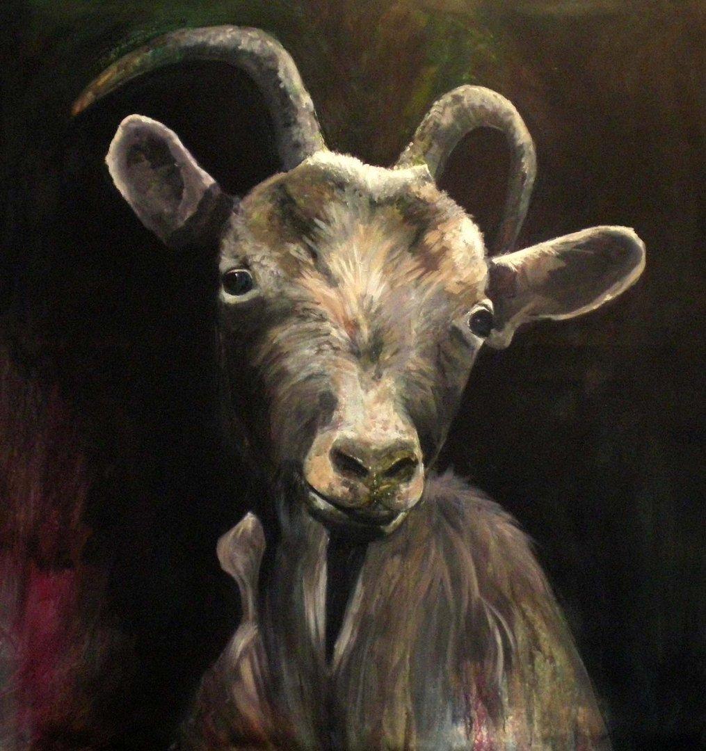 Ziegenportrait