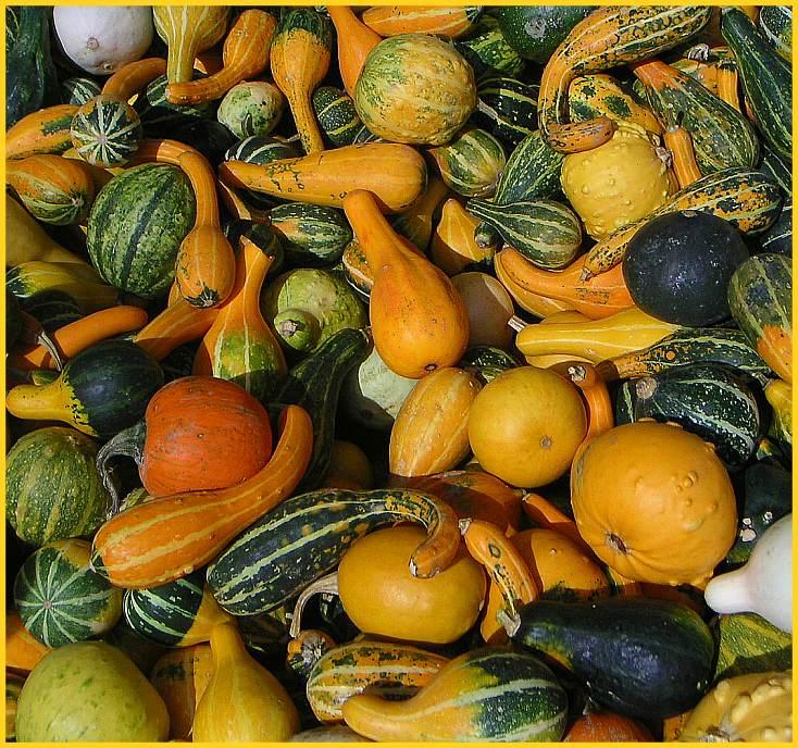Zierkürbisse begleiten den Herbst