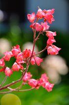 zierliche rote Blüten
