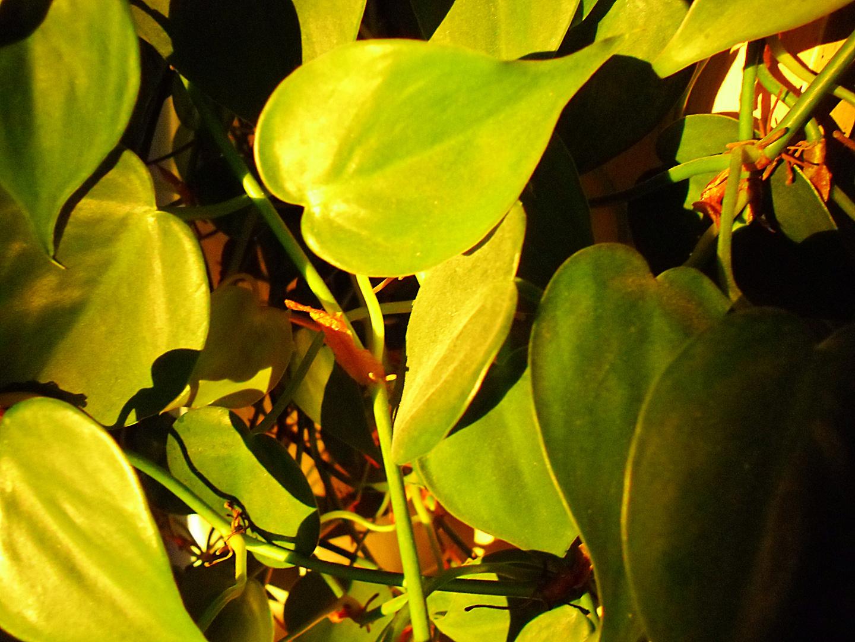 Zimmerpflanzen im Abendlicht