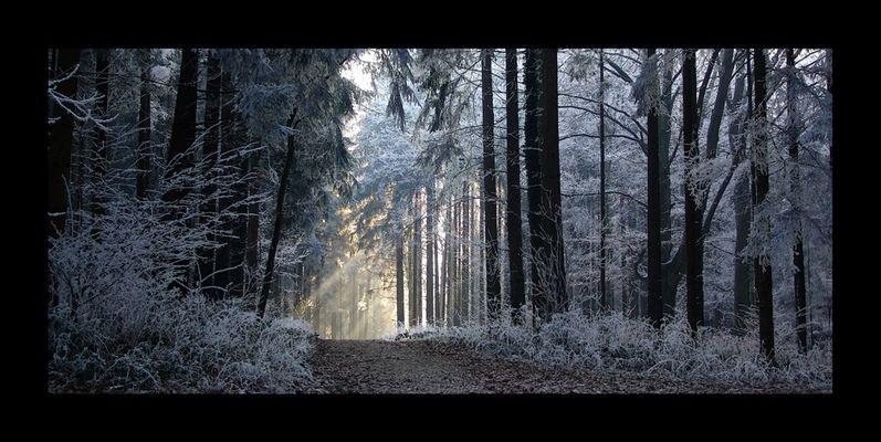 *** zimowe impresje ***