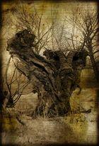 Zimt - Merkwürdiger Baum -