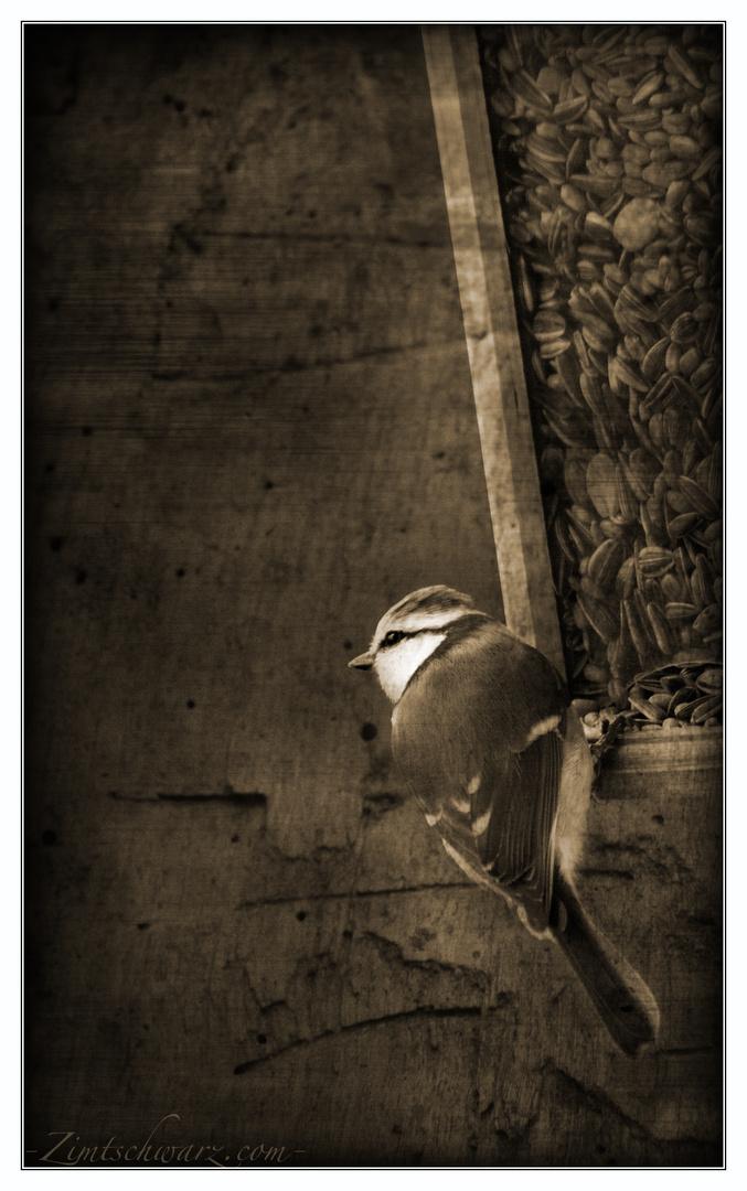 Zimt - Vogel -