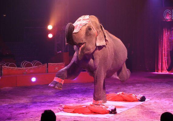 Zirkus Charles Knie in Recklinghausen 5