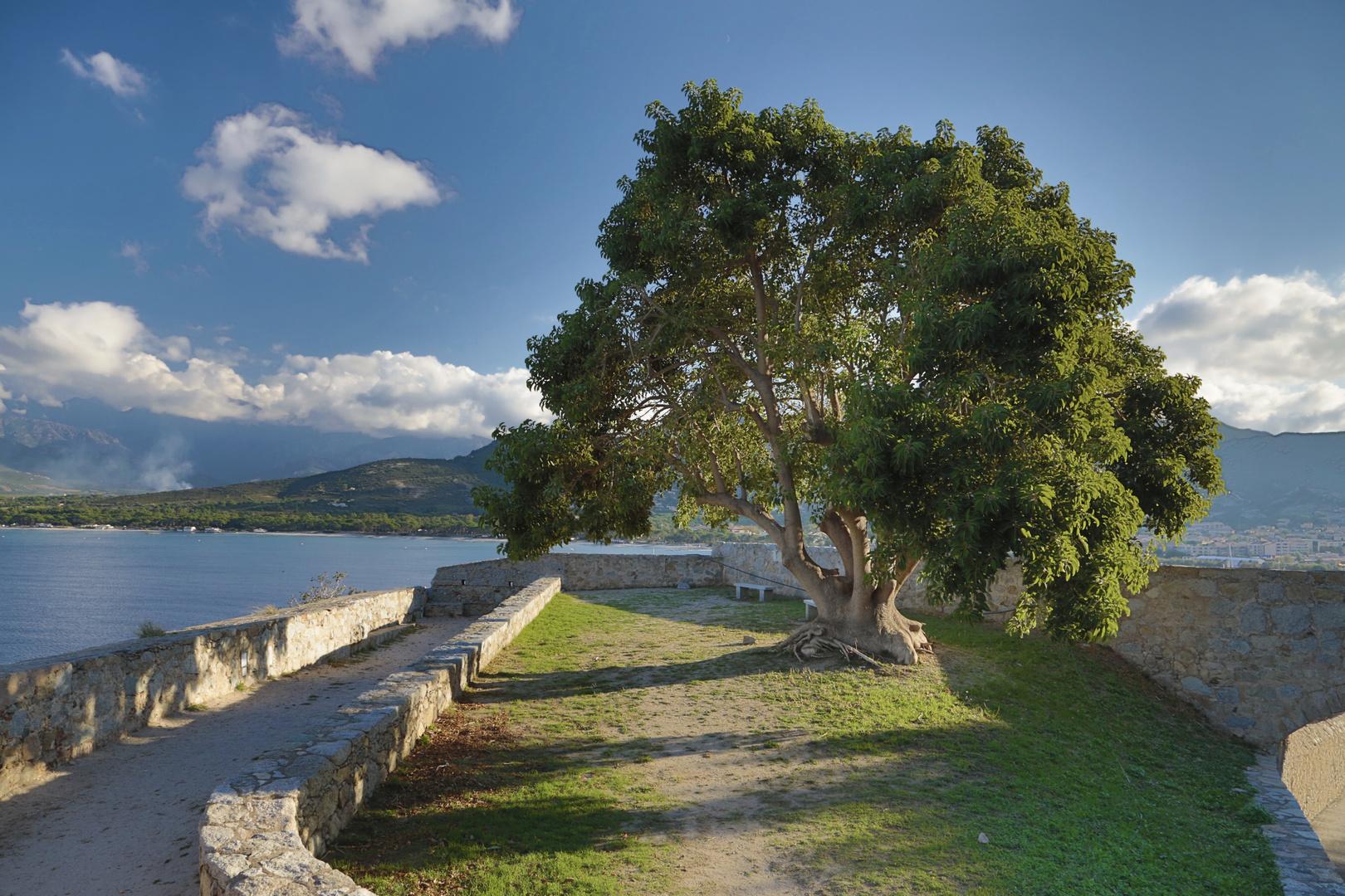 Zitadelle Calvi IV