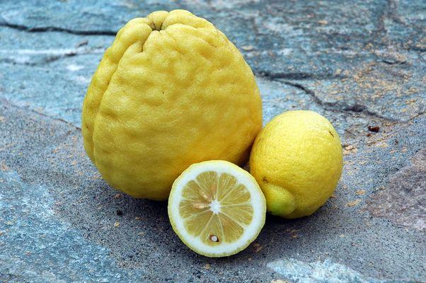 Zitrone mit kleinen Schwestern