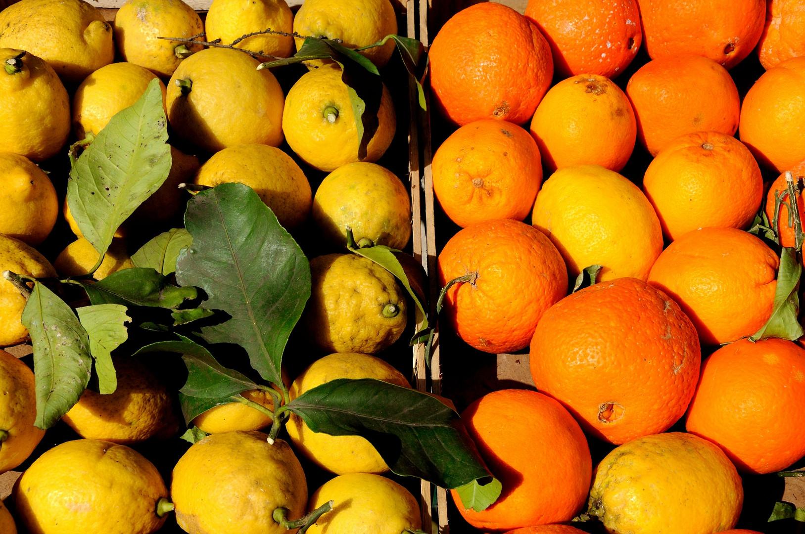 Zitronen - Orangen