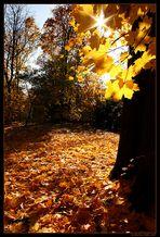 Zlota jesien