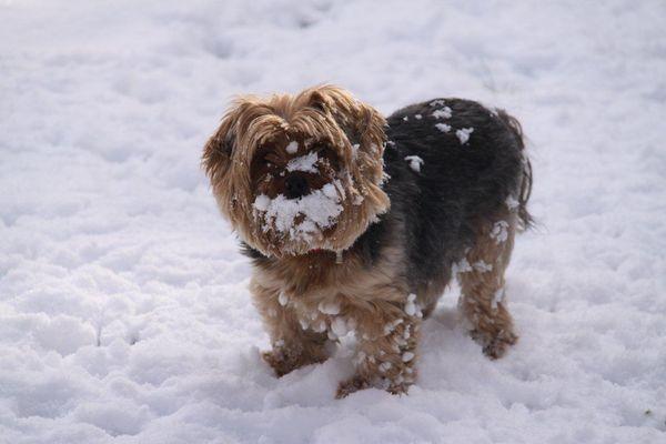 Zoé dans la neige !