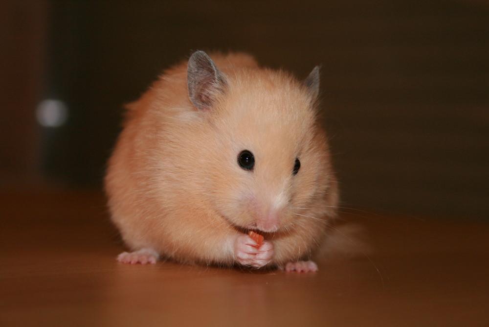 Zoé mon hamster!