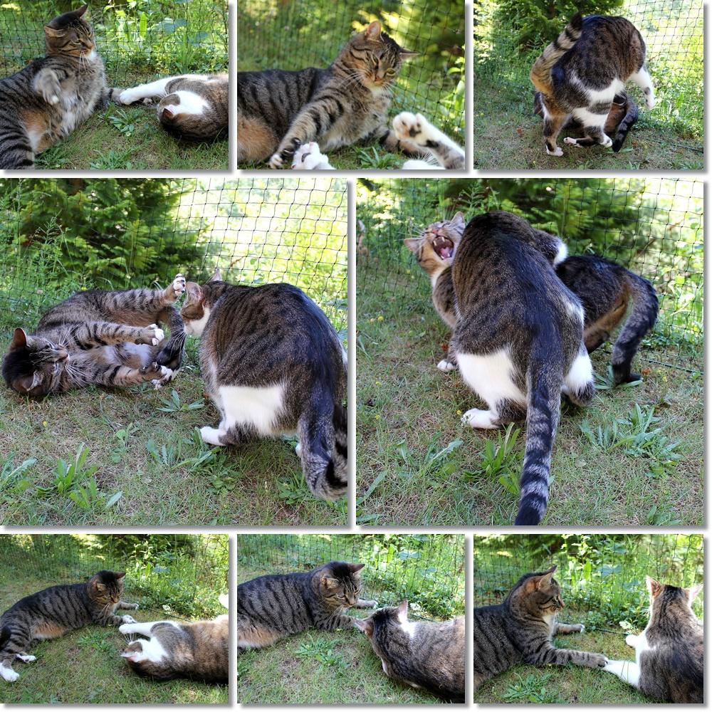 >> Zoff im Katzengarten