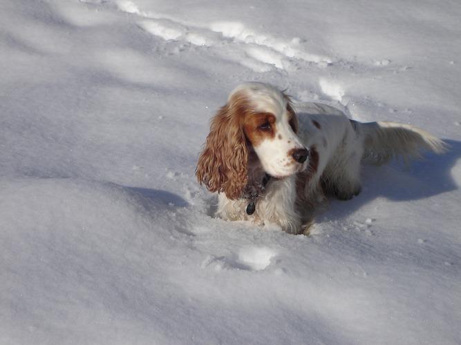 zoff im schnee