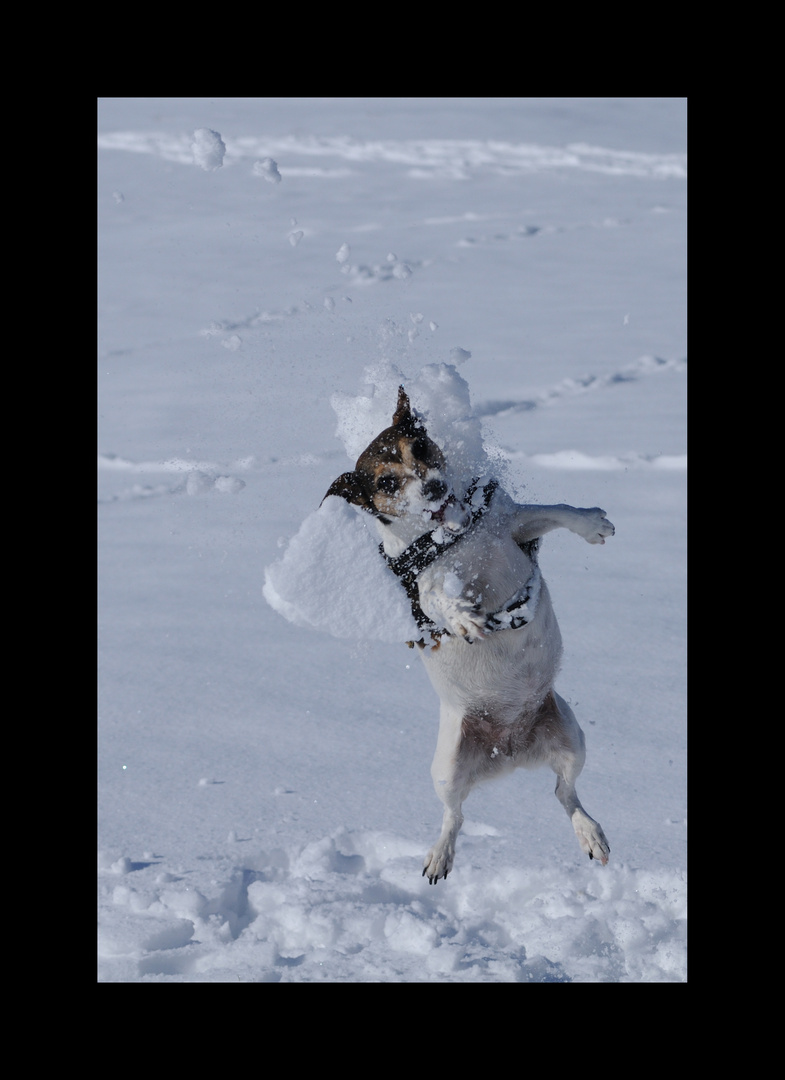 Zola the Snowmonster