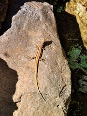 zone reptile