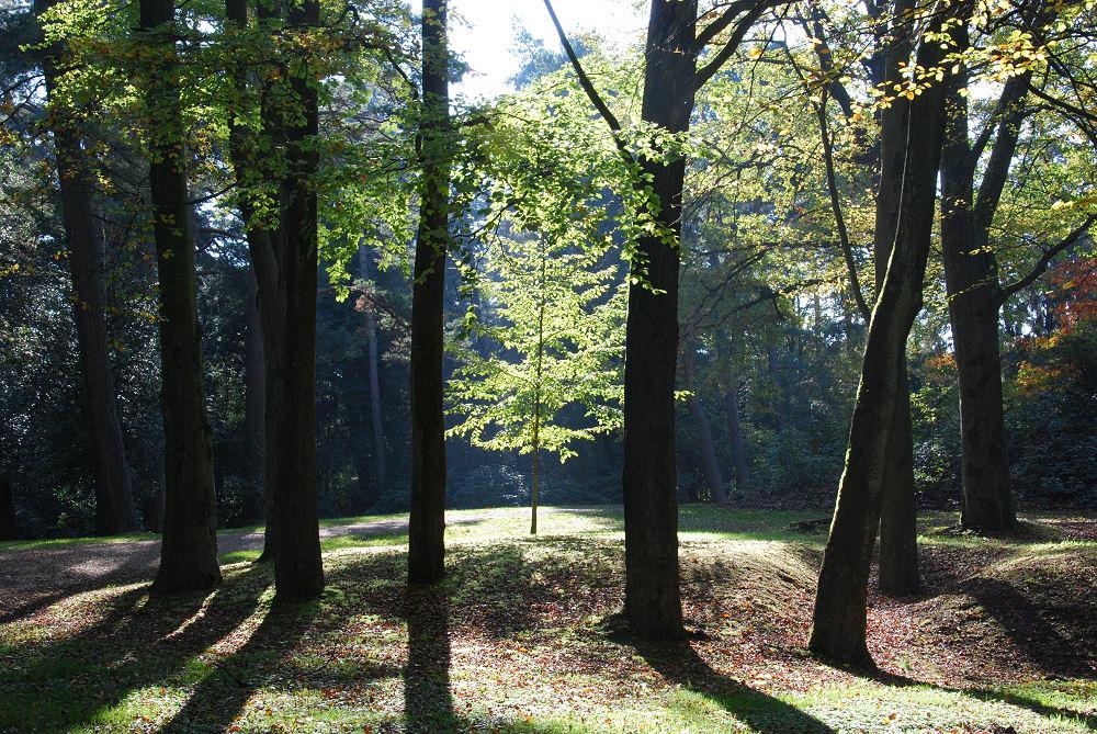 Zonlicht in de herfst - Sonnenlicht im Herbst