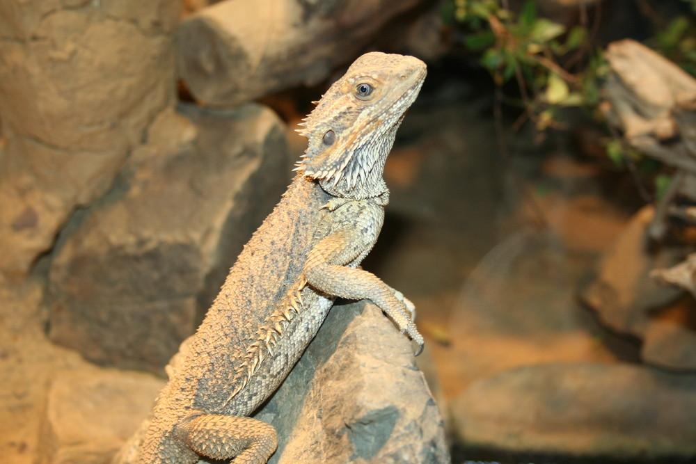 Zoo 2008 #2