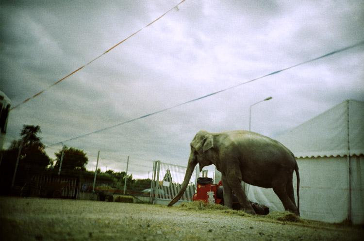 Zoo #3