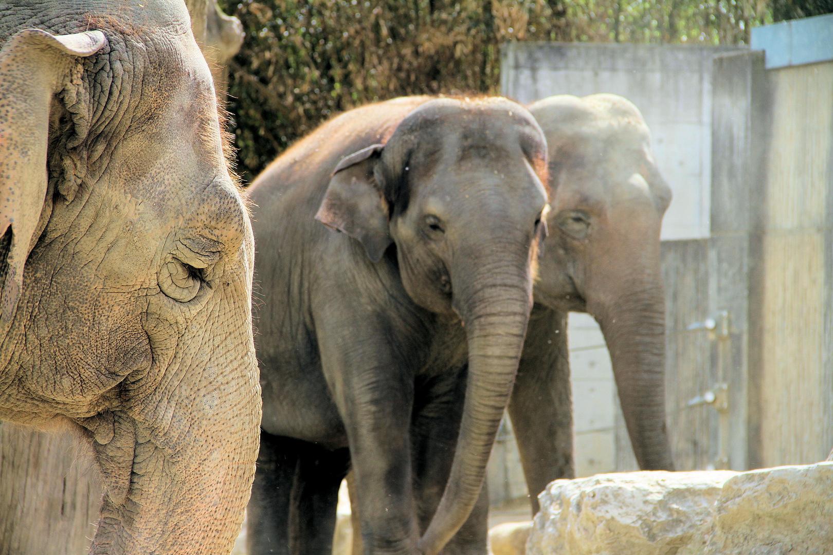 Zoo Alltag