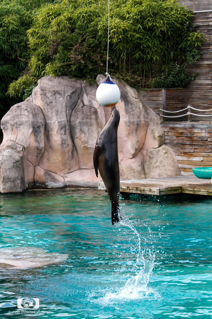 Zoo Amneville 4