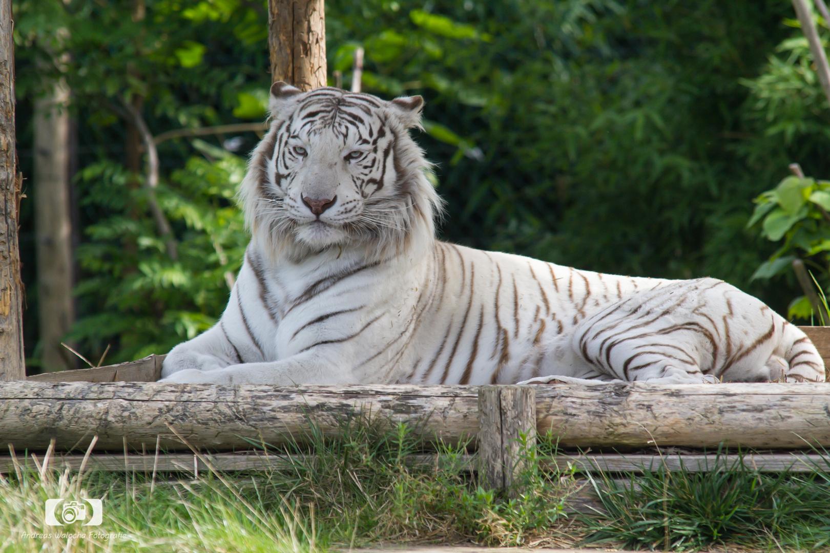 Zoo Amneville 5