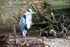 Zoo Augsburg 3