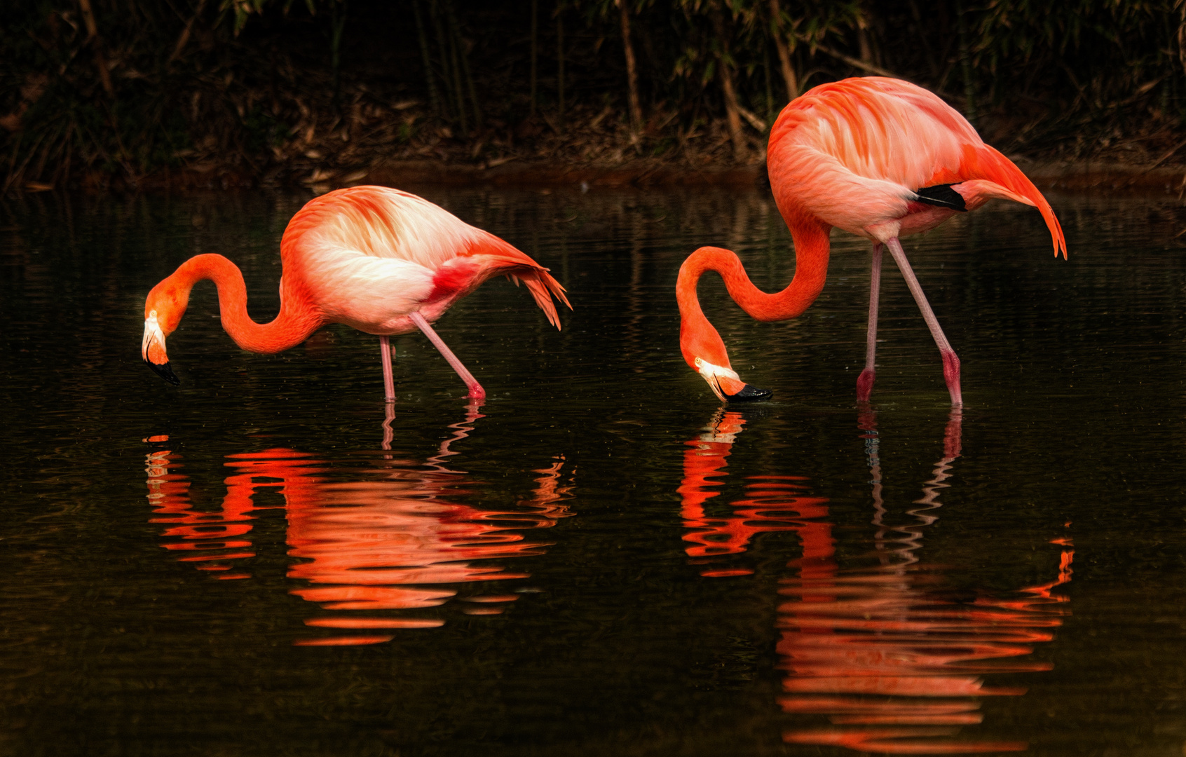 Zoo Barcelona Flamingos