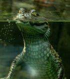 Zoo Berlin Krokodil