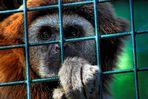 .... Zoo Blick ...